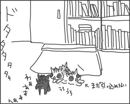 猫の狼狽っぷり