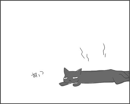 ホットクロネコ