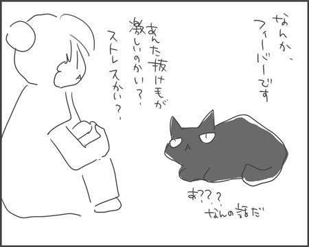 猫ヒゲラッシュ